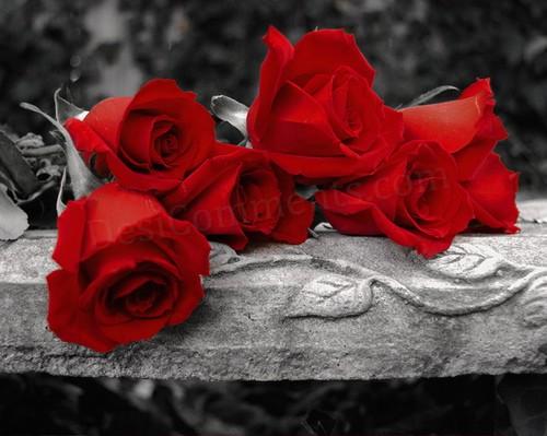 En cada flor mataste mi emoción y fue quemante dardo cada espina clavada en mi deshecho corazón